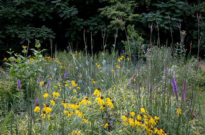 yellow and purple flowers in bloom, an example of naturalistic garden design