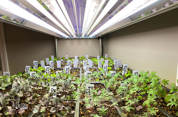 Seedlings under grow lights — an example of lighting plants indoors