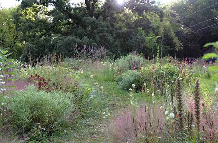 Kelly Norris's front yard meadow.