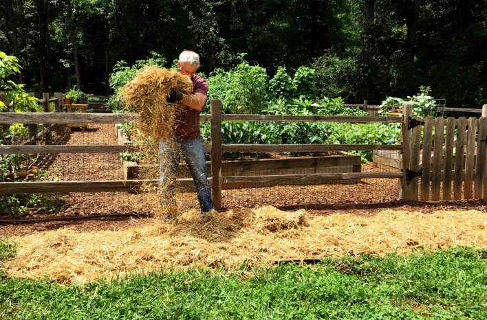 Laying straw for no-dig gardening
