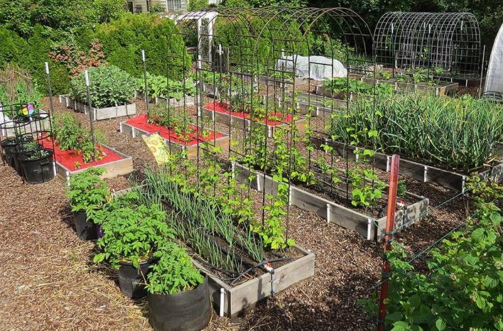 Susan Mulvihill's garden