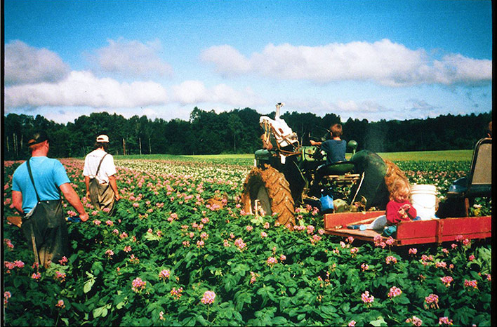 potatoes field with tractor