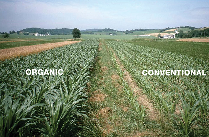 Organic and conventional field