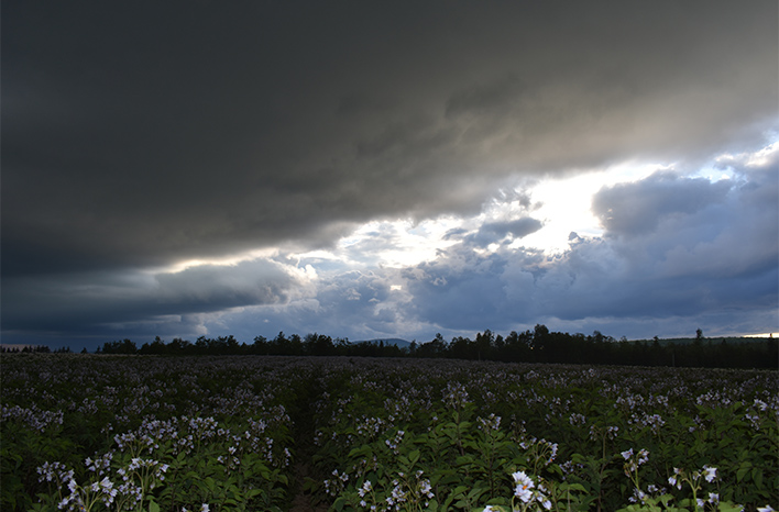 Stormy sky over a field