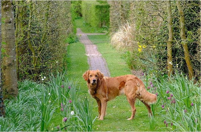 Dog in the garden