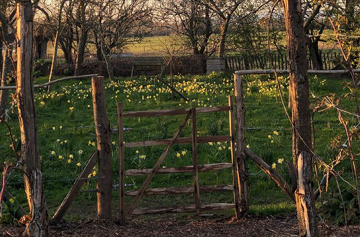 wooden gate in garden