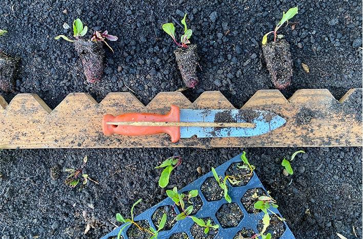 Spacing seedlings with a planting board