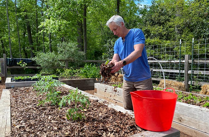 Joe adding shredded leaves to his garden as the best mulch for vegetables