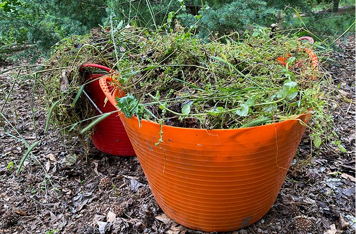 Buckets full of plant material