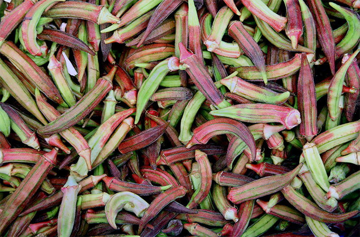 red and green okra pods