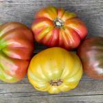 How Do I Grow Tomatoes?