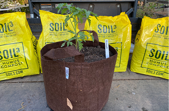 I like seven-gallon grow bags for more compact plants like bush tomatoes and peppers, but a 15-gallon grow bag for indeterminate tomatoes.