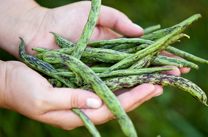 purple speckled green beans