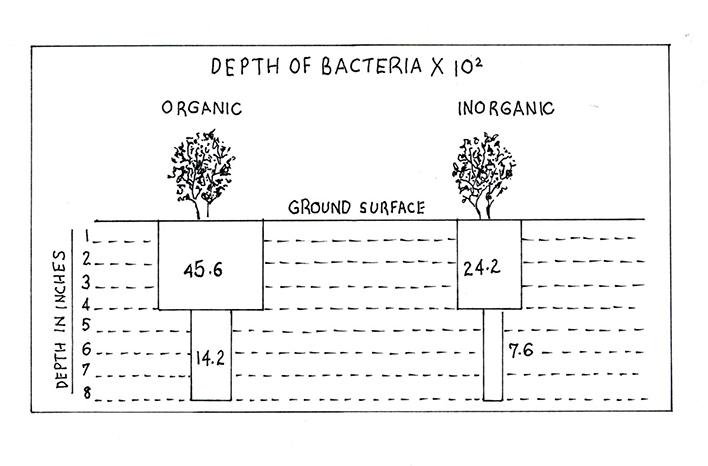 Depth of Bacteria