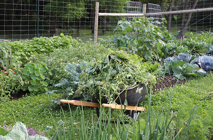Meg Cowden's garden