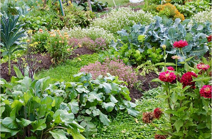 fall crops in garden