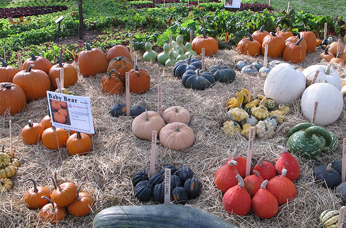 Colorful gourds and pumpkins