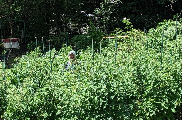 Craig LeHoullier with tomato plants