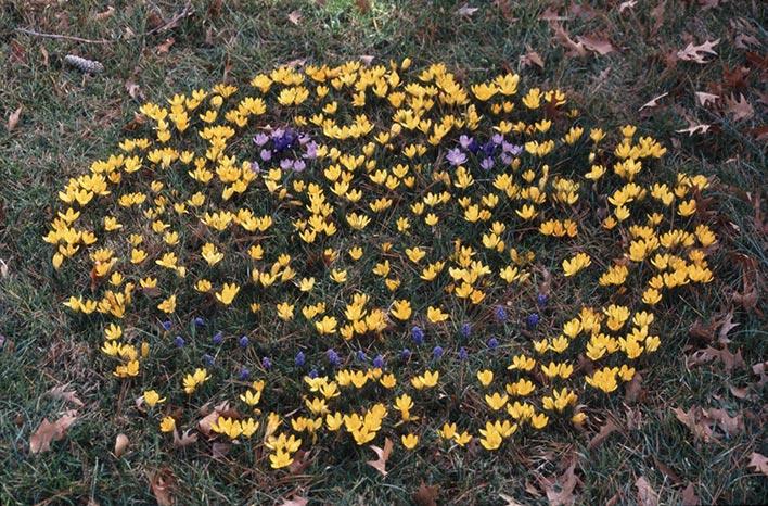Happy face flower activity