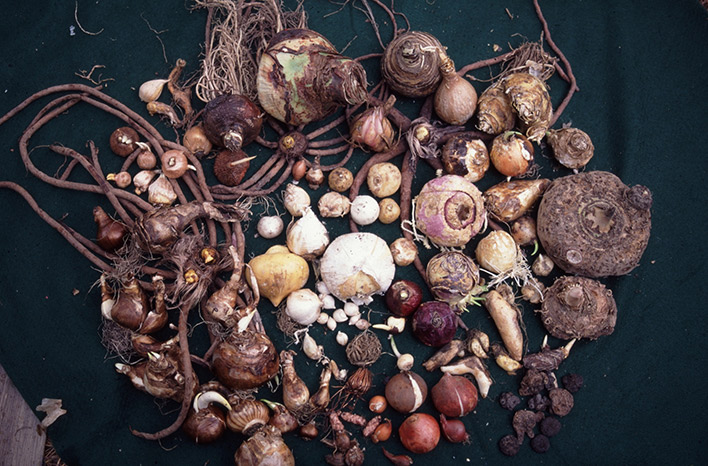 Spring flowering fall planted bulbs