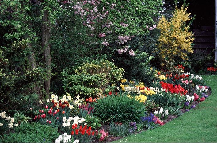 Herbaceous and bulbous garden