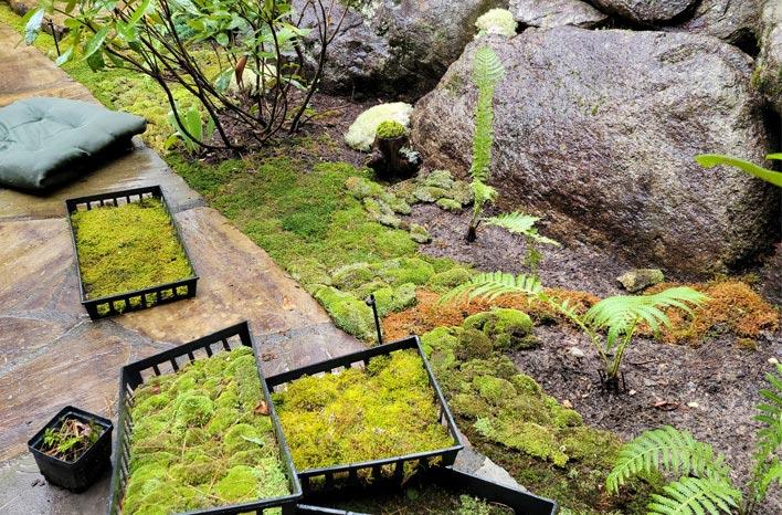 Moss patio