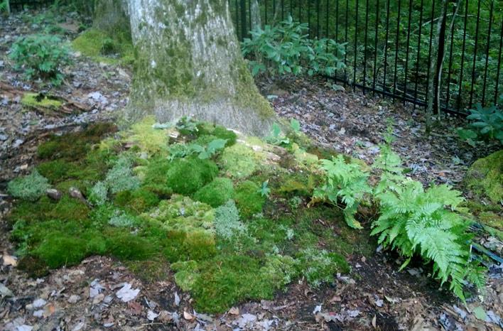 Moss tree skirt