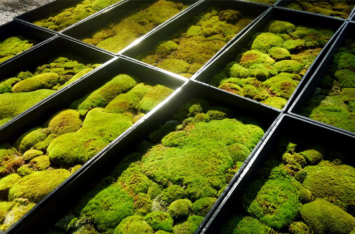 Moss trays