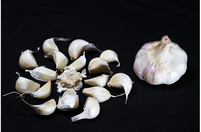 transylvanian garlic